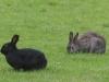 Free-Range-Rabbits