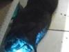 img_20120524_211623-1
