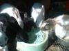 img_20120609_101059-1